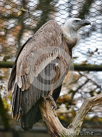 Free Vultures In The Zoo Stock Image - 62054271