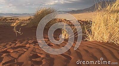Wüste von Nord-Afrika stock footage