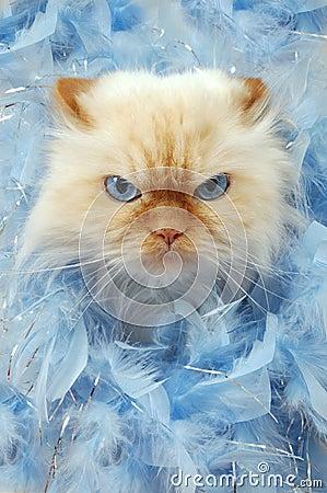 Wütende Katze