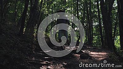 W górę stopy w bucie Mężczyzny wycieczkowicz biega wzdłuż ścieżki w lato lasowym wycieczkowiczu wycieczkuje w lesie przy zmierzch zbiory
