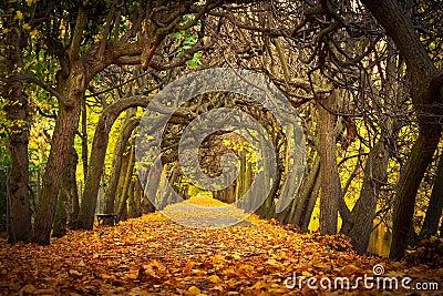 W jesiennym parku piękna aleja