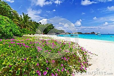 W Tajlandia tropikalna plaża