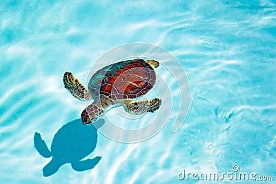 W wodzie dziecko żółw