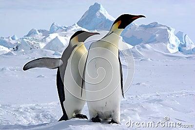 Waar is de Antarctis?