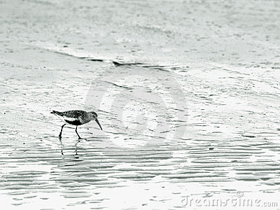 Wading bird at the sea