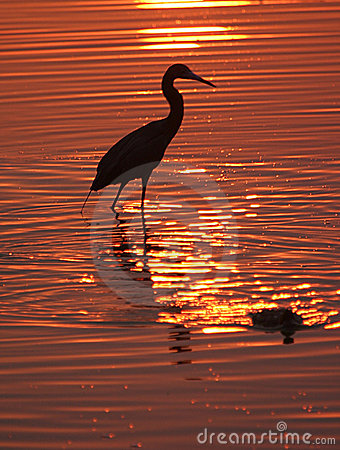 Wading bird at sunset