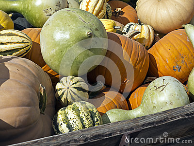 Wagon full of harvested pumpkins and squash