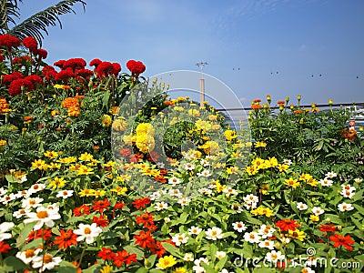 Wagon kolei linowej kwiaty