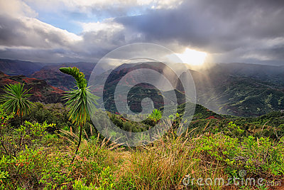 Waimea Canyon in Kauai, Hawaii Islands.