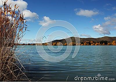 Wairepo Arm Lake