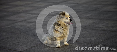 A waiting dog