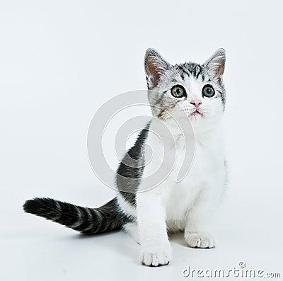 Waiting kitten