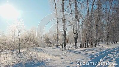 Wald im Winter Viel Schnee In den Vordergrundbäumen ohne Laub im Frost stock footage