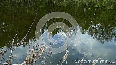 Waldsee Zweige eines trockenen Busch vor dem Hintergrund eines Waldsees stock video footage
