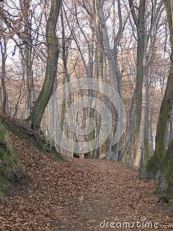 Free Walk Stock Image - 782591