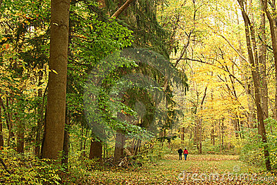 Walk through an Autumn Forest