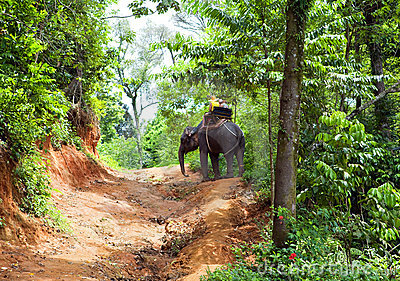 Walk on an elephant in jungle