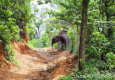 Walk on an elephant in jungle