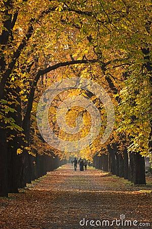 Walk in mystic fall