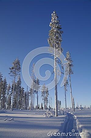 Walk through a sunny swedish Winter wonderland