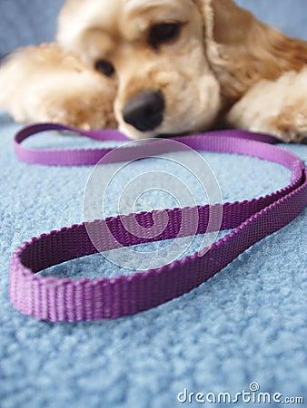 Free Walk The Dog Stock Images - 647264