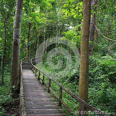 Walk way in the forest
