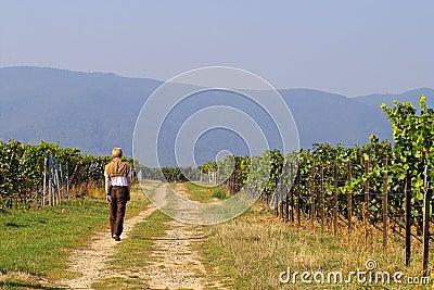 Walk in wineyards