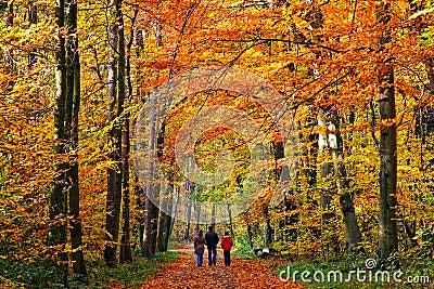 Walking in autumn park