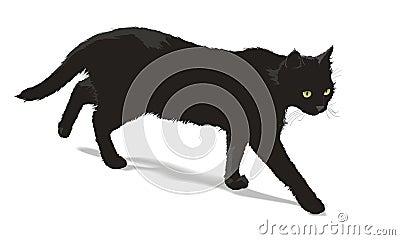 Walking black cat
