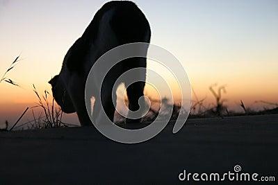 Walking Cat Silhouette