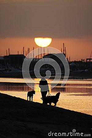 Walking dogs on a beach