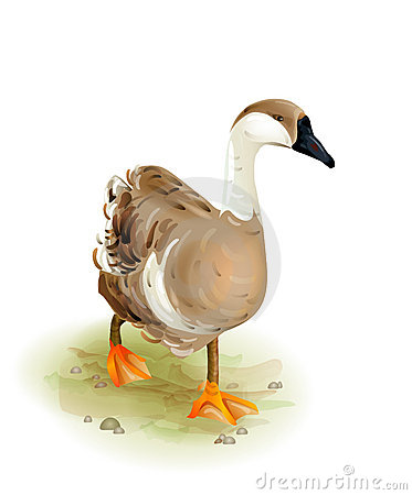 Free Walking Domestic Goose. Stock Photo - 20641900