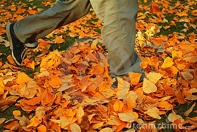 Walking through fall leaves 1