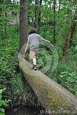 Walking on a fallen tree