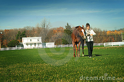 Walking horse in meadow