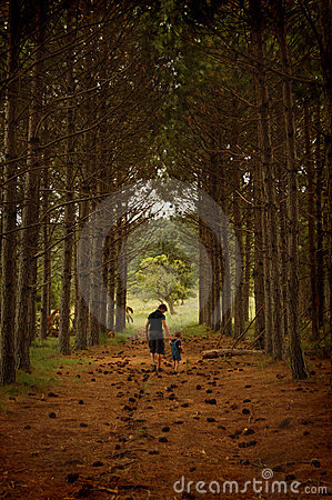 Free Walking In The Pine Corridor Stock Photos - 433563