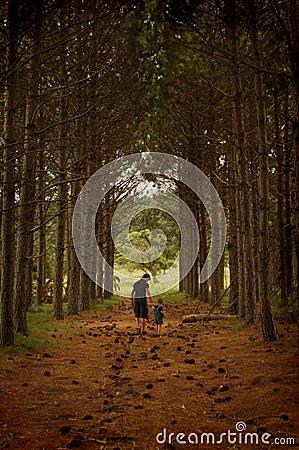 Free Walking In The Pine Corridor Stock Photos - 433563