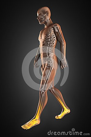 Walking man radiography