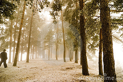 Walking in misty forest