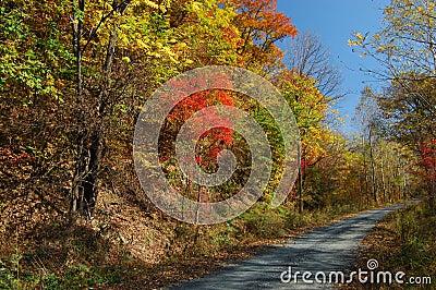 Walking path by colourful hillside