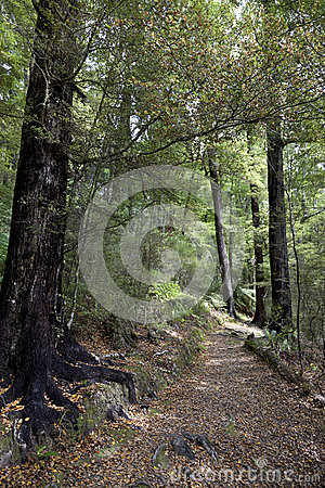 Walking path in Pelorus Bridge Scenic Reserve