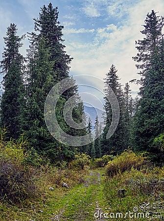 Walking path to the mountain gorge Stock Photo