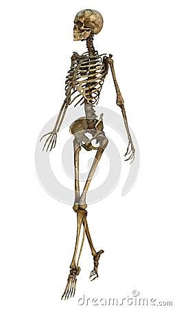 walking skeleton stock illustration - image: 40925093, Skeleton