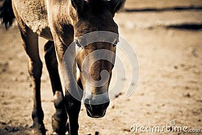 Walking stallion