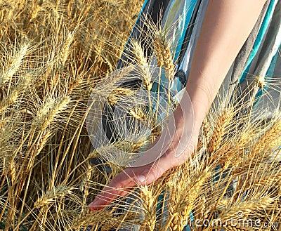 Walking on the wheat land