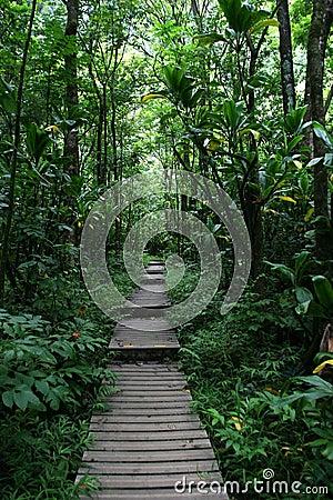 Walkway through Hawaii forest