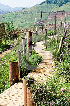 Walkway made ​​of bamboo.