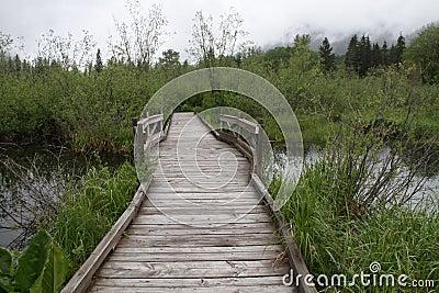 Walkway over marsh land