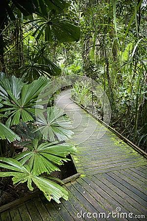 Walkway in rainforest.