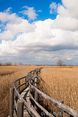 Walkway in a reed thicket